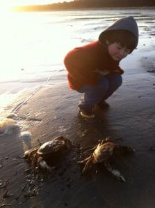 FisherCrabs